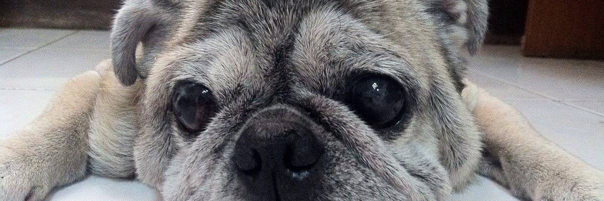 Pet Grief – How To Help